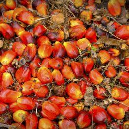 alimentazione e olio di palma